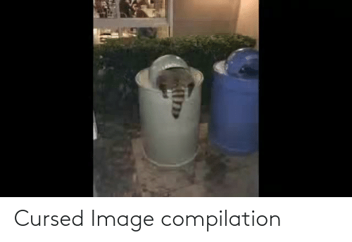 compilation: Cursed Image compilation