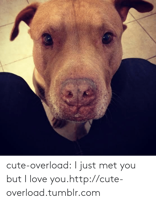 Just Met: cute-overload:  I just met you but I love you.http://cute-overload.tumblr.com
