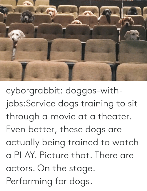 actors: cyborgrabbit:  doggos-with-jobs:Service dogs training to sit through a movie at a theater.  Even better, these dogs are actually being trained to watch a PLAY. Picture that. There are actors. On the stage. Performing for dogs.