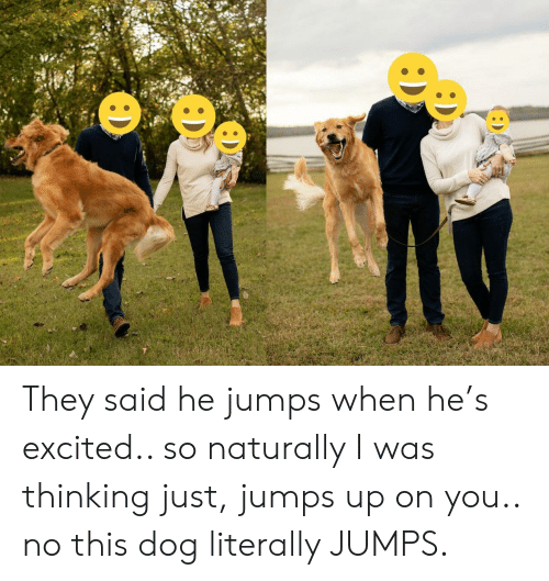 naturally: : D They said he jumps when he's excited.. so naturally I was thinking just, jumps up on you.. no this dog literally JUMPS.