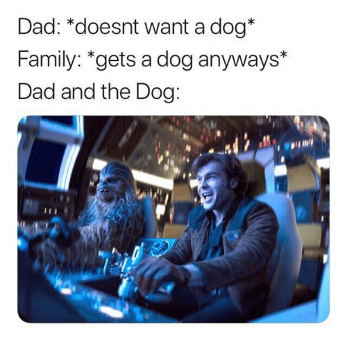 Dad, Family, and Dog: Dad: *doesnt want a dog*  Family: *gets a dog anyways*  Dad and the Dog: