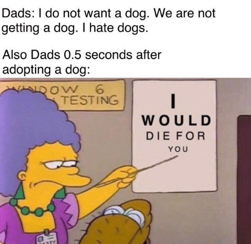 Dank, Dogs, and 🤖: Dads: I do not want a dog. We are not  getting a dog. I hate dogs.  Also Dads 0.5 seconds after  adopting a dog  ow 6  TESTING  WOULD  DIE FOR  YOU