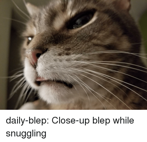 snuggling: daily-blep:  Close-up blep while snuggling