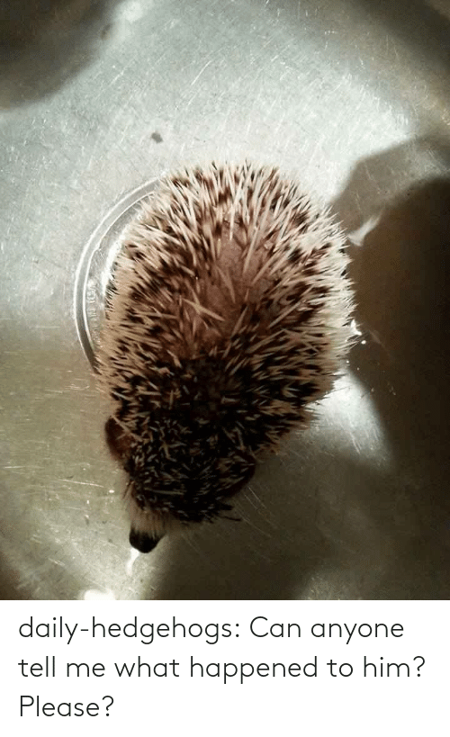 Him Please: daily-hedgehogs:  Can anyone tell me what happened to him? Please?