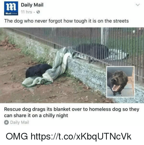 Funny, Homeless, and Omg: Daily Mail  11 hrs  mailOnline  The dog who never forgot how tough it is on the streets  Rescue dog drags its blanket over to homeless dog so they  can share it on a chilly night  Daily Mail OMG https://t.co/xKbqUTNcVk