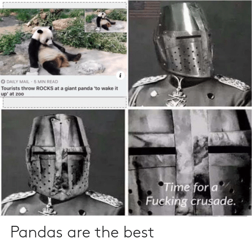 giant panda: DAILY MAIL-5 MIN READ  Tourists throw ROCKS at a giant panda 'to wake it  up at zoo  Time for a  Fucking crusade. Pandas are the best