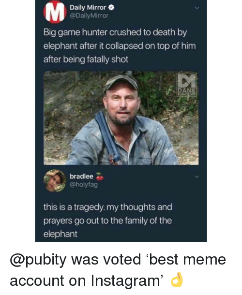 daily mirror: Daily Mirror e  @DailyMirror  Lu  Big game hunter crushed to death by  elephant after it collapsed on top of him  after being fatally shot  DAN  bradlee  @holyfag  this is a tragedy. my thoughts and  prayers go out to the family of the  elephant @pubity was voted 'best meme account on Instagram' 👌