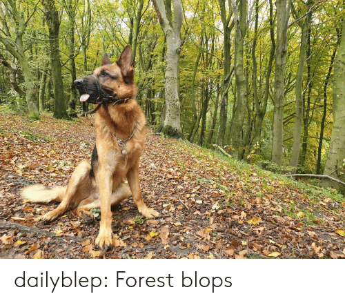 forest: dailyblep:  Forest blops