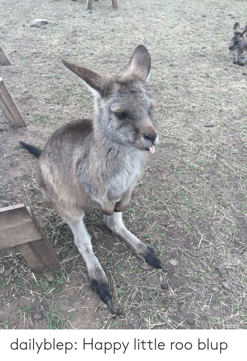 Tumblr, Blog, and Happy: dailyblep:  Happy little roo blup