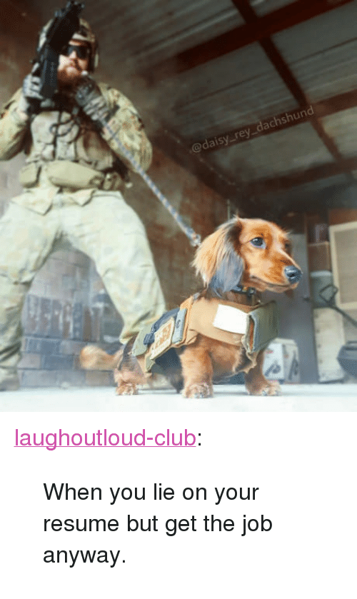 """dachshund: @daisy rey_dachshund <p><a href=""""http://laughoutloud-club.tumblr.com/post/166353881370/when-you-lie-on-your-resume-but-get-the-job"""" class=""""tumblr_blog"""">laughoutloud-club</a>:</p>  <blockquote><p>When you lie on your resume but get the job anyway.</p></blockquote>"""