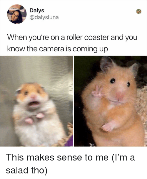Memes, Camera, and 🤖: Dalys  @dalysluna  When you're on a roller coaster and you  know the camera is coming up This makes sense to me (I'm a salad tho)