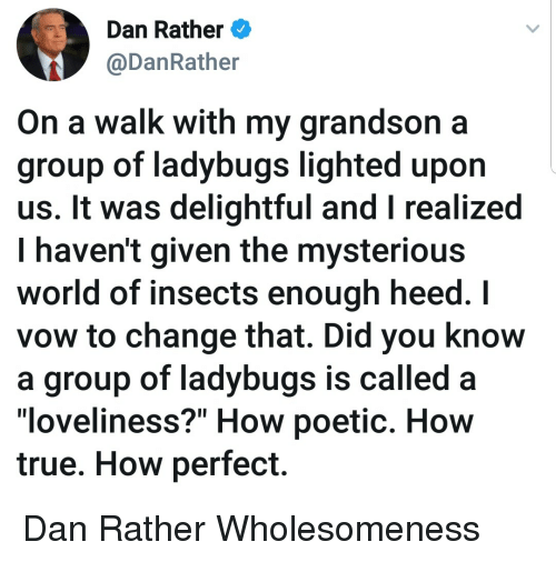 "delightful: Dan Rather  @DanRather  On a walk with my grandson a  group of ladybugs lighted upon  us. It was delightful and I realized  I haven't given the mysteriou:s  world of insects enough heed. I  vow to change that. Did you know  a group of ladybugs is called  ""loveliness?"" How poetic. How  true. How perfect. Dan Rather Wholesomeness"
