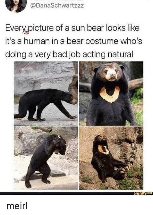 Bad, Funny, and Bear: @DanaSchwartzzz  Every picture of a sun bear looks like  it's a human in a bear costume who's  doing a very bad job acting natural  funny meirl