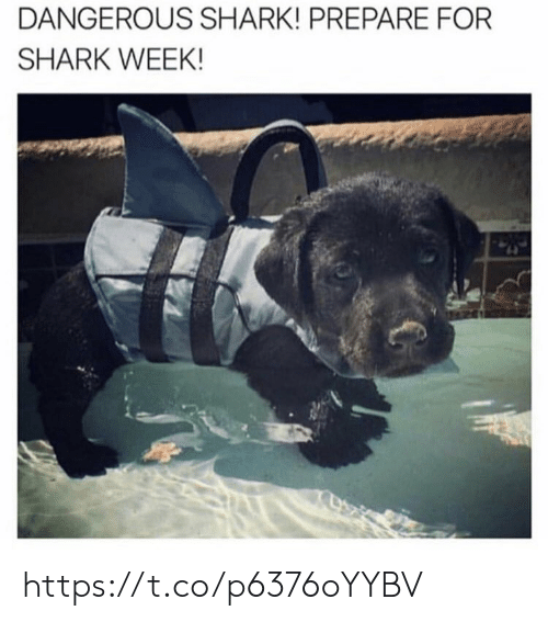 Memes, Shark, and 🤖: DANGEROUS SHARK! PREPARE FOR  SHARK WEEK! https://t.co/p6376oYYBV