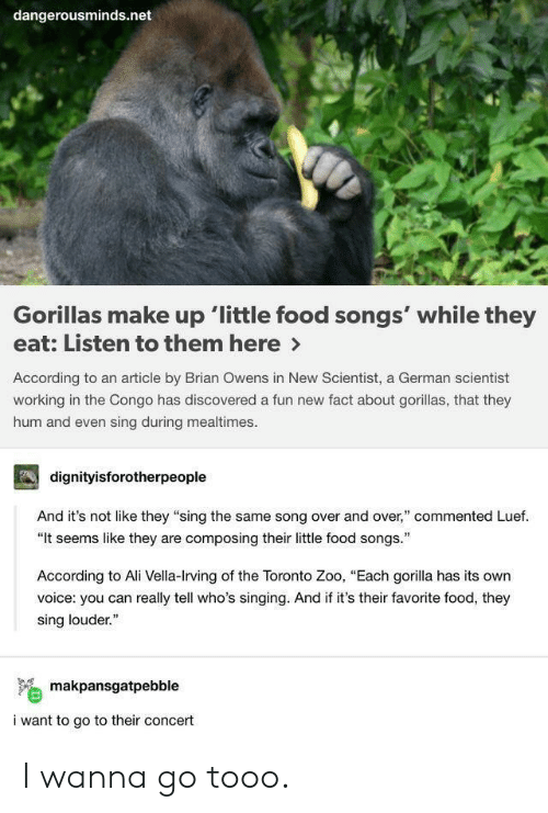 "gorilla: dangerousminds.net  Gorillas make up 'little food songs' while they  eat: Listen to them here>  According to an article by Brian Owens in New Scientist, a German scientist  working in the Congo has discovered a fun new fact about gorillas, that they  hum and even sing during mealtimes  dignityisforotherpeople  And it's not like they ""sing the same song over and over,"" commented Luef.  ""It seems like they are composing their little food songs.  According to Ali Vella-Irving of the Toronto Zoo, ""Each gorilla has its own  voice: you can really tell who's singing. And if it's their favorite food, they  sing louder.""  makpansgatpebble  i want to go to their concert I wanna go tooo."