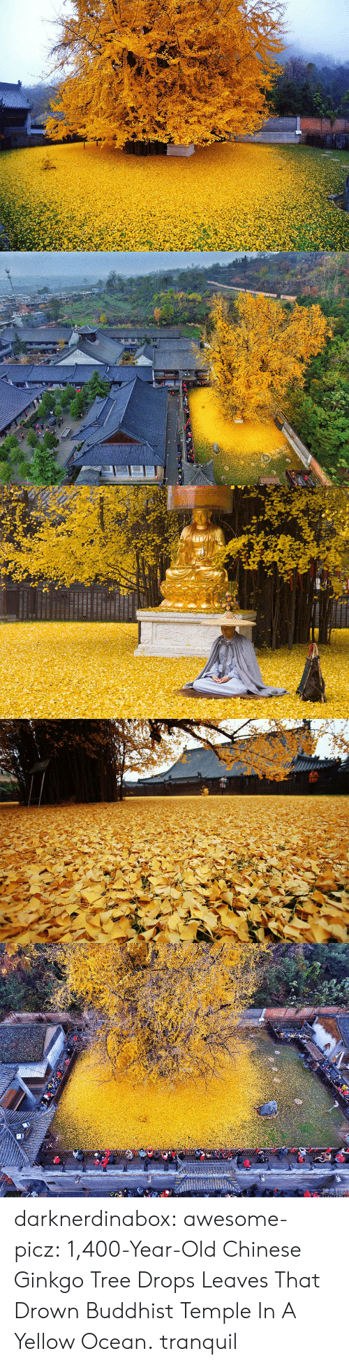 buddhist: darknerdinabox:  awesome-picz:    1,400-Year-Old Chinese Ginkgo Tree Drops Leaves That Drown Buddhist Temple In A Yellow Ocean.  tranquil