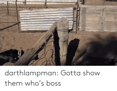 show: darthlampman:  Gotta show them who's boss