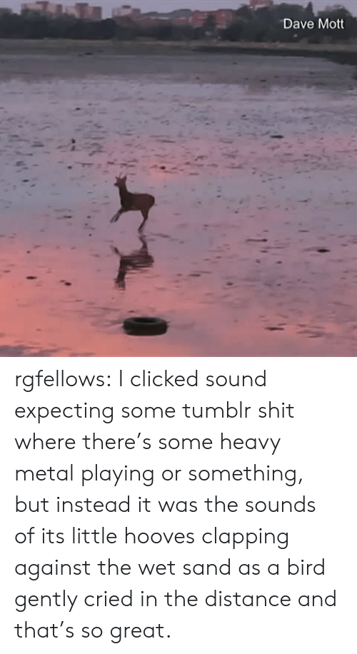 Shit, Target, and Tumblr: Dave Mott rgfellows: I clicked sound expecting some tumblr shit where there's some heavy metal playing or something, but instead it was the sounds of its little hooves clapping against the wet sand as a bird gently cried in the distance and that's so great.