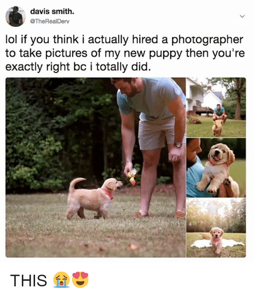 Lol, Pictures, and Puppy: davis smith.  @TheRealDerv  lol if you think i actually hired a photographer  to take pictures of my new puppy then you're  exactly right bc i totally did. THIS 😭😍