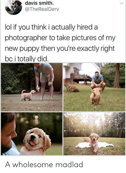 Lol, Pictures, and Puppy: davis smith  @TheRealDerv  lol if you think i actually hired a  photographer to take pictures of my  new puppy then you're exactly right  bc i totally did. A wholesome madlad