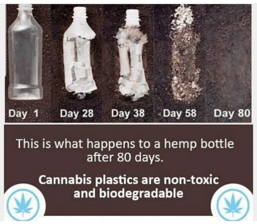 plastics: Day 1 Day 28Day 38Day 58 Day 80  This is what happens to a hemp bottle  after 80 days.  Cannabis plastics are non-toxic  and biodegradable