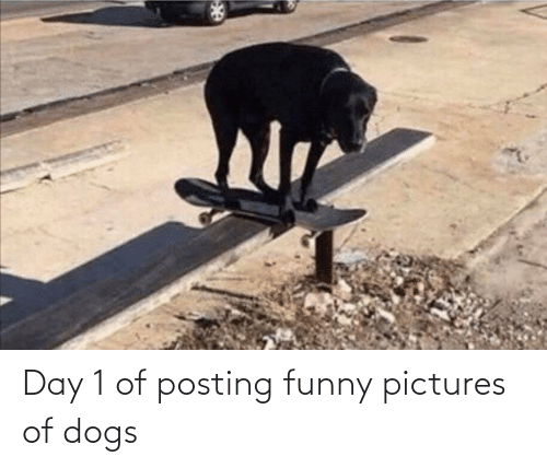 funny pictures: Day 1 of posting funny pictures of dogs