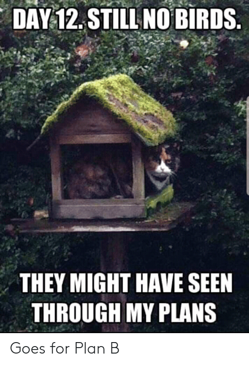 Cats, Plan B, and Birds: DAY 12. STILL NO BIRDS  THEY MIGHT HAVE SEEN  THROUGH MY PLANS Goes for Plan B