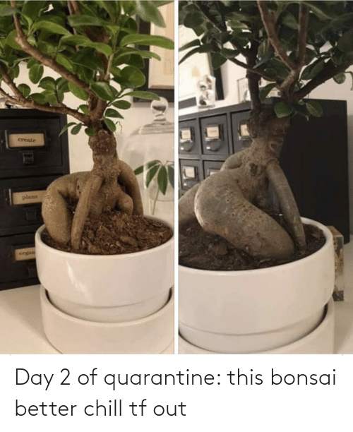2: Day 2 of quarantine: this bonsai better chill tf out