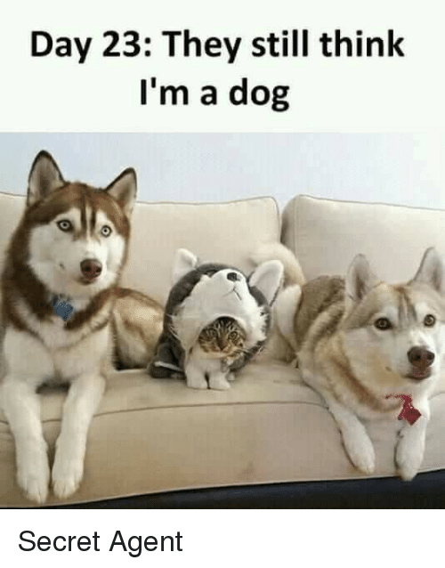 secret agent: Day 23: They still think  I'm a dog Secret Agent