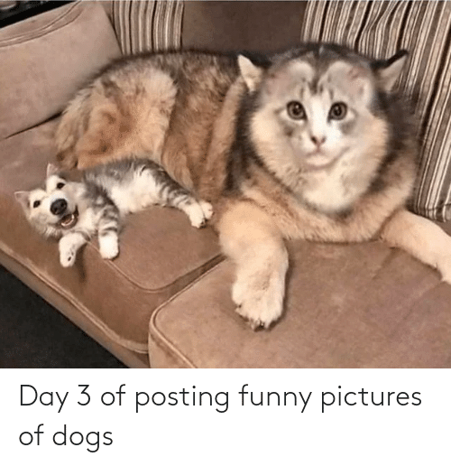 funny pictures: Day 3 of posting funny pictures of dogs