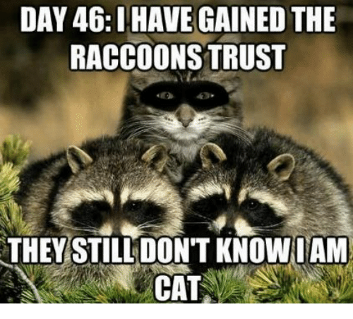 The Raccoons: DAY 46: HAVE GAINED THE  RACCOONS TRUST  THEY STILL DON'T KNOW IAM  CAT