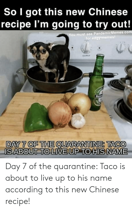 day: Day 7 of the quarantine: Taco is about to live up to his name according to this new Chinese recipe!