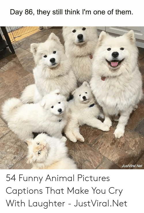 funny animal: Day 86, they still think I'm one of them  JustViral Net 54 Funny Animal Pictures Captions That Make You Cry With Laughter - JustViral.Net