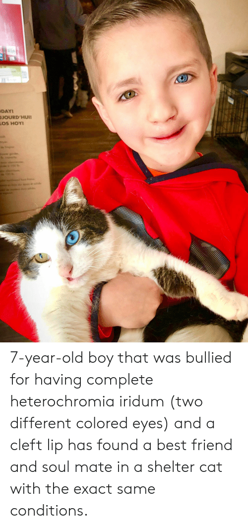 Best Friend, Best, and Old: DAY  JOURD'HUII 7-year-old boy that was bullied for having complete heterochromia iridum (two different colored eyes) and a cleft lip has found a best friend and soul mate in a shelter cat with the exact same conditions.