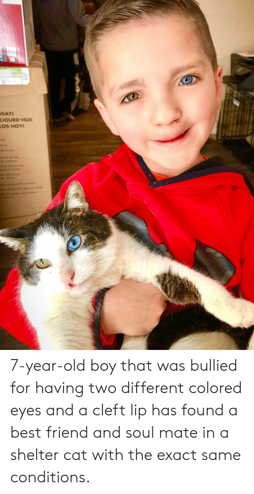 Best Friend, Best, and Old: DAY  JOURD'HUII 7-year-old boy that was bullied for having two different colored eyes and a cleft lip has found a best friend and soul mate in a shelter cat with the exact same conditions.