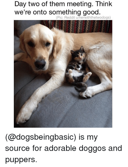 Thinked: Day two of them meeting. Think  we're onto something good.  (Pic: Reddit u/herwiththetwodogs) (@dogsbeingbasic) is my source for adorable doggos and puppers.