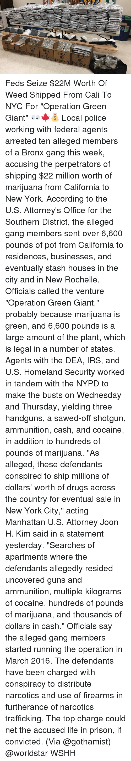 "Drugs, Guns, and Irs: DEA DEA DEA  ENCE FVACEENDENCE ENIDENCE EVIDENCIE  2  DEA Feds Seize $22M Worth Of Weed Shipped From Cali To NYC For ""Operation Green Giant"" 👀🍁💰 Local police working with federal agents arrested ten alleged members of a Bronx gang this week, accusing the perpetrators of shipping $22 million worth of marijuana from California to New York. According to the U.S. Attorney's Office for the Southern District, the alleged gang members sent over 6,600 pounds of pot from California to residences, businesses, and eventually stash houses in the city and in New Rochelle. Officials called the venture ""Operation Green Giant,"" probably because marijuana is green, and 6,600 pounds is a large amount of the plant, which is legal in a number of states. Agents with the DEA, IRS, and U.S. Homeland Security worked in tandem with the NYPD to make the busts on Wednesday and Thursday, yielding three handguns, a sawed-off shotgun, ammunition, cash, and cocaine, in addition to hundreds of pounds of marijuana. ""As alleged, these defendants conspired to ship millions of dollars' worth of drugs across the country for eventual sale in New York City,"" acting Manhattan U.S. Attorney Joon H. Kim said in a statement yesterday. ""Searches of apartments where the defendants allegedly resided uncovered guns and ammunition, multiple kilograms of cocaine, hundreds of pounds of marijuana, and thousands of dollars in cash."" Officials say the alleged gang members started running the operation in March 2016. The defendants have been charged with conspiracy to distribute narcotics and use of firearms in furtherance of narcotics trafficking. The top charge could net the accused life in prison, if convicted. (Via @gothamist) @worldstar WSHH"