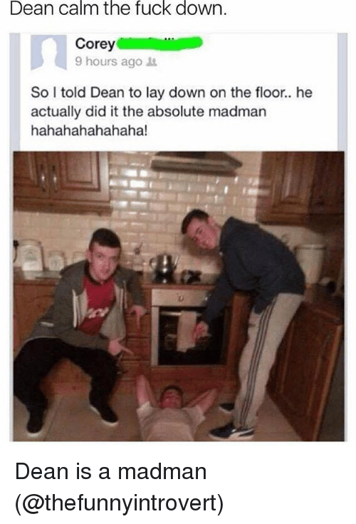 He Actually Did It: Dean calm the fuck down.  9 hours ago  So I told Dean to lay down on the floor.. he  actually did it the absolute madman  hahahahahahaha! Dean is a madman (@thefunnyintrovert)