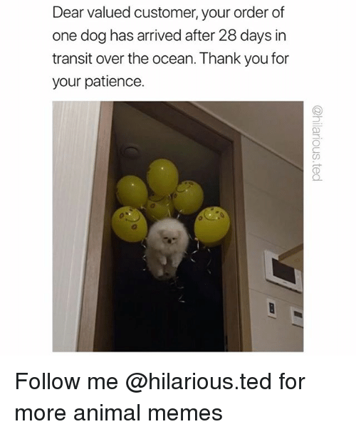 Funny, Memes, and Ted: Dear valued customer, your order of  one dog has arrived after 28 days in  transit over the ocean. Thank you for  your patience.  CD Follow me @hilarious.ted for more animal memes