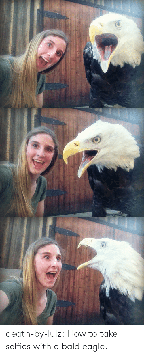 Tumblr, Blog, and Death: death-by-lulz: How to take selfies with a bald eagle.