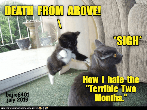 "Oom: DEATH FROM ABOVE!  SIGH  How I hate the  ""Terrible Two  Months.""  bajio6401  july 2019  ICANHASCHEEZBURGER.OOM C"