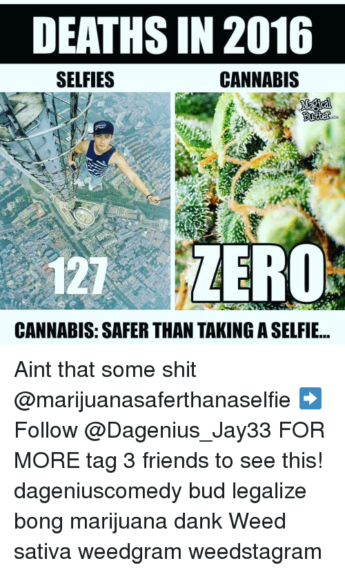 Cannabies: DEATHS IN 2016  CANNABIS  SELFIES  Butter  COD  121 ZERO  CANNABIS: SAFER THAN TAKING ASELFIE Aint that some shit @marijuanasaferthanaselfie ➡️ Follow @Dagenius_Jay33 FOR MORE tag 3 friends to see this! dageniuscomedy bud legalize bong marijuana dank Weed sativa weedgram weedstagram
