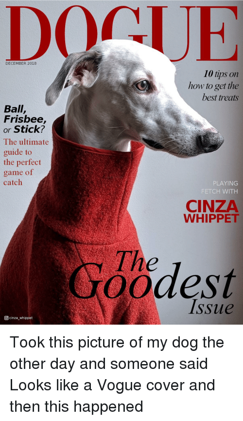 Best, Game, and How To: DECEMBER 2018  10 tips on  how to get the  best treats  Ball,  Frisbee,  or Stick?  The ultimate  guide to  the perfect  game of  catch  PLAYING  FETCH WITH  CINZA  WHIPPET  The  oodest  Issue  回cinza-whippet Took this picture of my dog the other day and someone said Looks like a Vogue cover and then this happened
