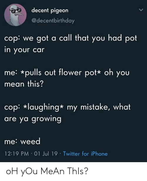 my mistake: decent pigeon  @decentbirthday  cop: we got a call that you had pot  in your car  me: *pulls out flower pot* oh you  mean this?  cop: laughing* my mistake, what  are ya growing  me: weed  12:19 PM 01 Jul 19 Twitter for iPhone oH yOu MeAn ThIs?
