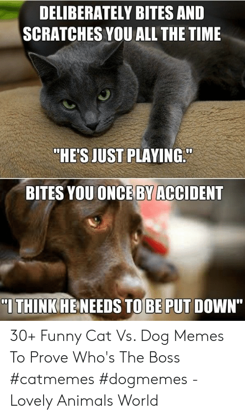 """Animals, Funny, and Memes: DELIBERATELY BITES AND  SCRATCHES YOU ALL THE TIME  """"HE'S JUST PLAYING.  BITES YOUONCE BY ACCIDENT  I THINK HENEEDS TOBE PUT DOWN"""" 30+ Funny Cat Vs. Dog Memes To Prove Who's The Boss #catmemes #dogmemes - Lovely Animals World"""