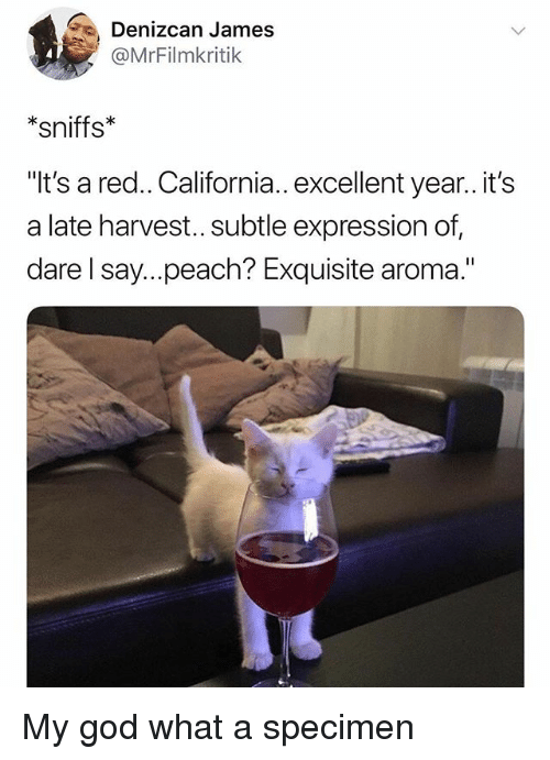 """specimen: Denizcan James  @MrFilmkritik  *sniffs  It's a red.. California.. excellent year..it's  a late harvest... subtle expression of,  dare l say...peach? Exquisite aroma."""" My god what a specimen"""