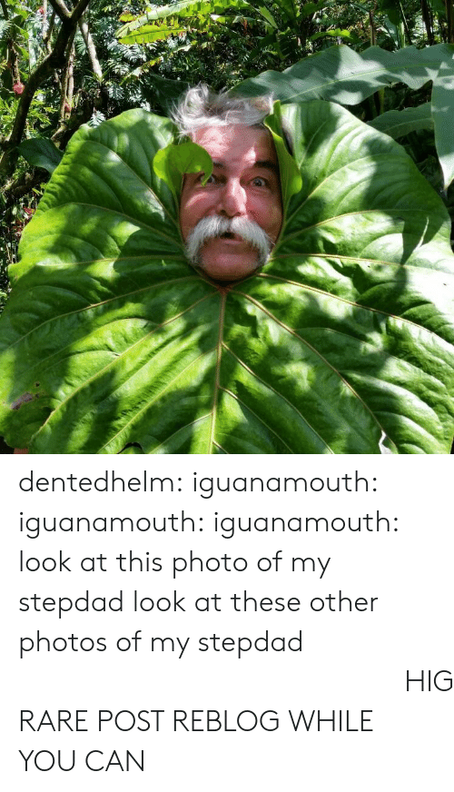 Tumblr, Blog, and Http: dentedhelm: iguanamouth:  iguanamouth:  iguanamouth:  look at this photo of my stepdad   look at these other photos of my stepdad   look  at  this  Final  Photo  of  my  stepdad  HIGH QUALITY RARE POST REBLOG WHILE YOU CAN
