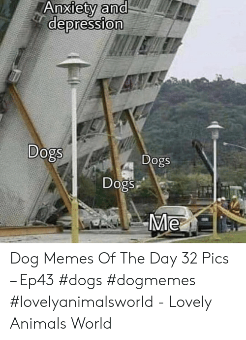 Animals, Dogs, and Memes: depression  0  Dogs  0  Dogs  Dogs  Me Dog Memes Of The Day 32 Pics – Ep43 #dogs #dogmemes #lovelyanimalsworld - Lovely Animals World