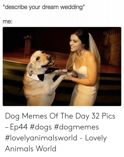 "Animals, Dogs, and Memes: ""describe your dream wedding""  me: Dog Memes Of The Day 32 Pics – Ep44 #dogs #dogmemes #lovelyanimalsworld - Lovely Animals World"