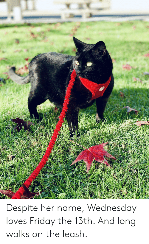 Friday, Friday the 13th, and Wednesday: Despite her name, Wednesday loves Friday the 13th. And long walks on the leash.